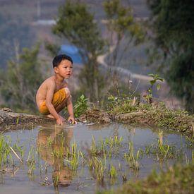 Vietnamesisches Kind, das auf dem Reisgebiet - Sa Pa, Vietnam spielt von Thijs van den Broek