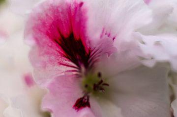 The Orchid  von Brian Morgan