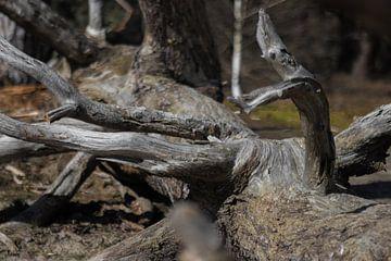 Kijkende tak op een boomstam