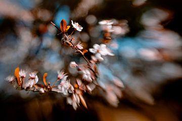 Blossom Vibe van Hiske Boon