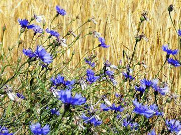 Bloemen blauw von