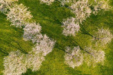 Bloeiende fruitbomen in de Zwabische Alb van Werner Dieterich