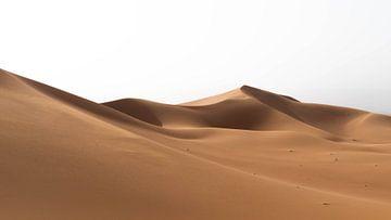 Sahara °6 sur Jesse Barendregt