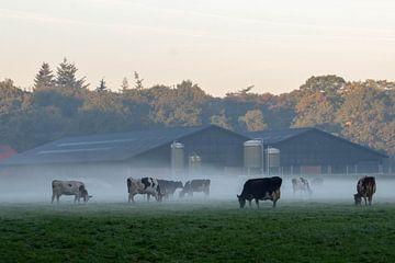 Koeien in de mist van Dave De Klerk