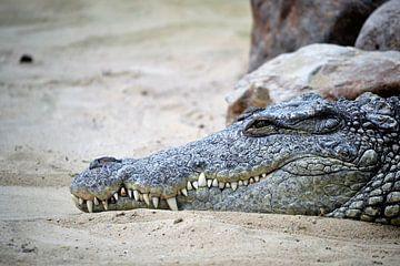 Krokodil von Marieke Peters-Brugmans