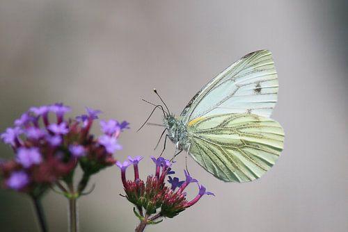 Dansende vlinder van Sabine Tilburgs