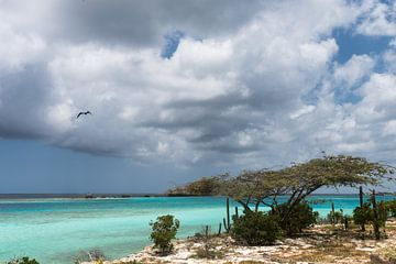 Divi divi boom aan de kust van Mangel Halto Beach (Aruba) sur eusphotography