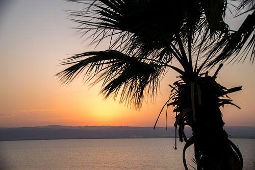 Palmboom voor zonsondergang bij de dode zee van Chantal Schutte
