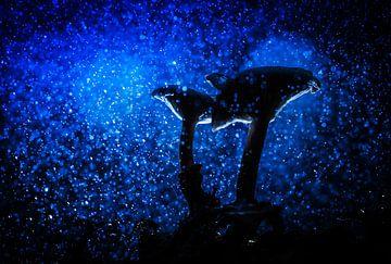 Paddenstoelen in de regen sur Marcel Ohlenforst