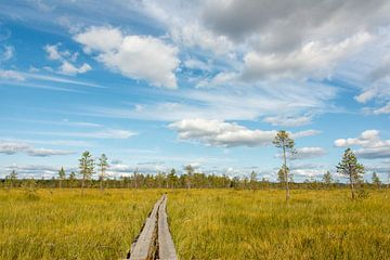 Wandern in unendlicher Landschaft in Schweden von Reis Genie