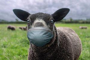 The black sheep sur Elianne van Turennout