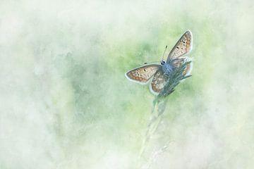 Papillon 8 sur Silvia Creemers