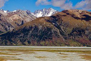Een eenzame boom in Nieuw Zeeland