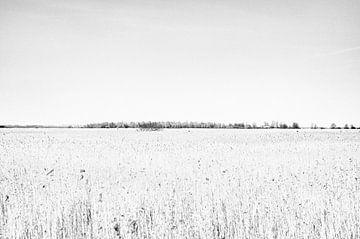 Wetlands van Jack de Jong