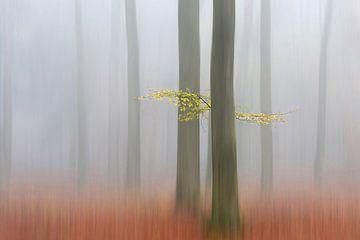 Autumnmorning, Huib Limberg von 1x