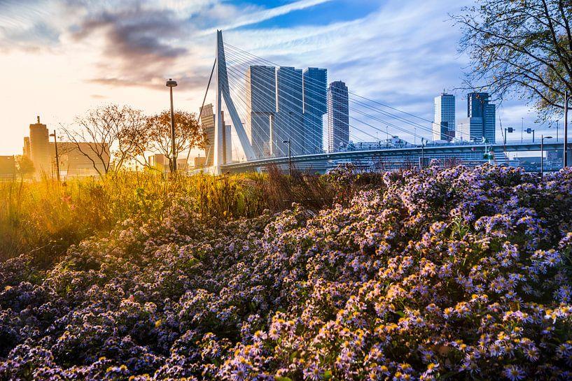 Herfst in Rotterdam van Dennis Vervoorn
