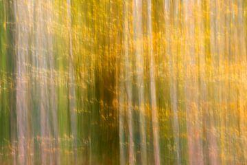 Goudgele bladeren aan de bomen van Barbara Brolsma