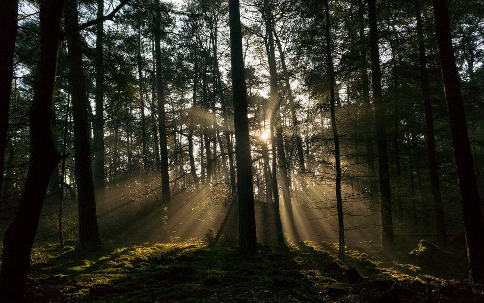 Zonlicht in het donkere bos