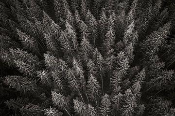 Patroon van bomen in het Zwarte Woud in Duitsland in zwart-wit van Evelien Oerlemans