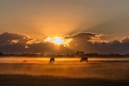 Lever de soleil à la ferme # 3 sur