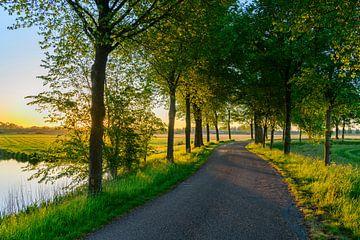 Frühmorgens Sonnenaufgang über dem Zwartendijk bei Kampen von Sjoerd van der Wal