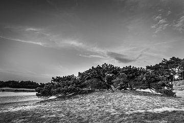 Struiken op de duinen van Geert-Jan Timmermans