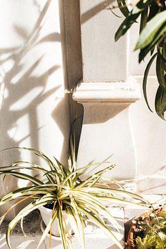 De witte muur van Lisette Venema