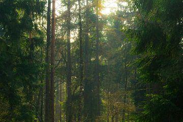 Zonnestralen door de bomen von Loes Huijnen