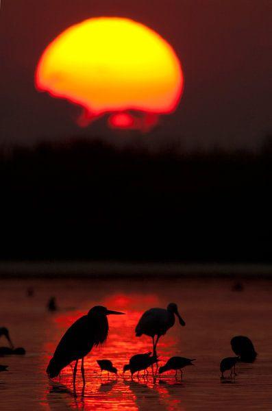 Zonsopkomst boven nationaal park Kiskunsag. van AGAMI Photo Agency
