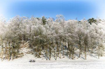 Besneeuwde bomen van