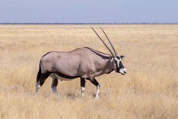 Oryx - Etosha National Park van Eddy Kuipers