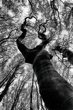 Baum, nach dem Himmel greifend von Annemiek van Eeden