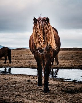Model-Pferd von Joris Machholz