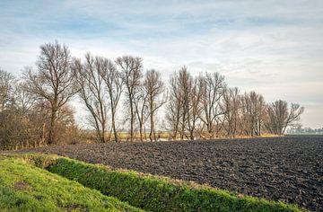 Rij hoge en kale bomen aan de rand van een pas geploegde akker van Ruud Morijn