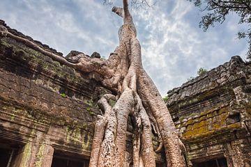Baum überwucherte den Tempel Ta Prohm, Kambodscha von Rietje Bulthuis