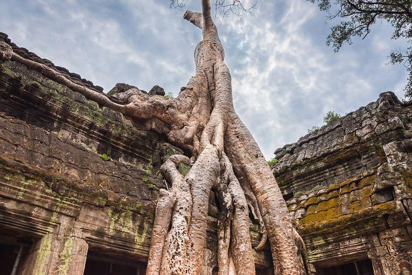 Boom overwoekert de tempel Ta Prohm, Cambodja van Rietje Bulthuis