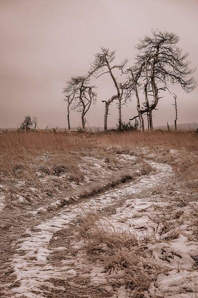 Skelett-Bäume von Rik Verslype