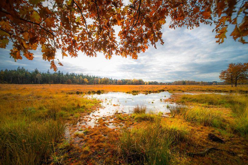 Herfst in Lage Vuursche van Catching Colors