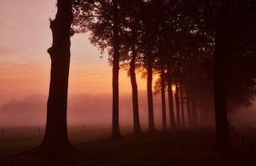 Boomsilhouetten in de mist tijdens zonsopkomst. van