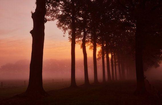 Boomsilhouetten in de mist tijdens zonsopkomst.