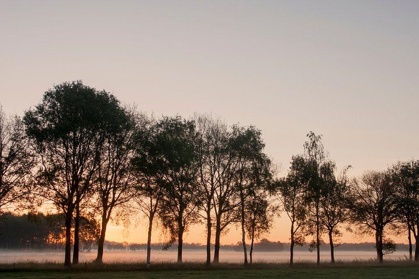 Morning Fog van Ruud van Ravenswaaij