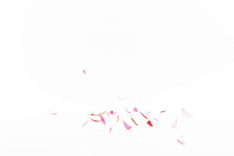 vallende bloemblaadjes 1 van Anita Visschers