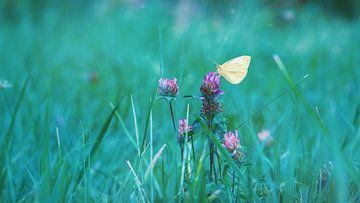 Schmetterling auf Blumen von Andreas Bechinie von Lazan