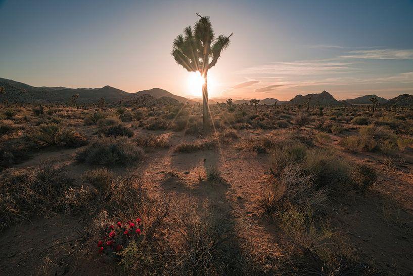 Woestijnbloemen van Joris Pannemans - Loris Photography