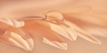 waterdruppels van Violetta Honkisz