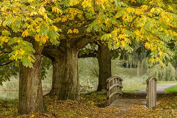 Herbstfarben in Rotterdam von Dirk Jan Kralt
