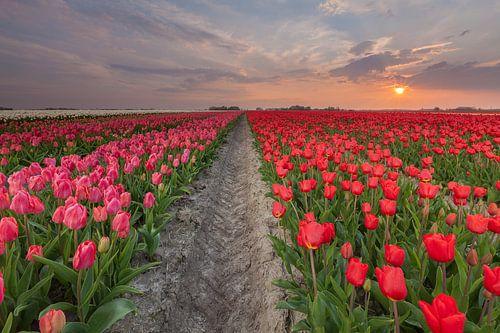 Zonsondergang in Zijldijk van Ron Buist