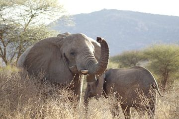 Zwaaiende olifant van Laurence Van Hoeck