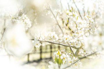 Blüte von Frans Scherpenisse