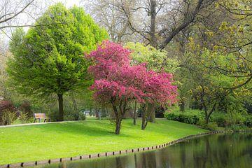 Groen Rotterdam (Het Park) van Prachtig Rotterdam